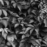 Предпосылка картины листьев Стоковые Изображения RF