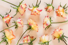 Предпосылка картины роз Стоковые Фото