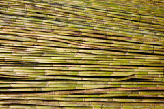 Предпосылка картины текстуры сбора тросточки реки зеленая Стоковое Изображение