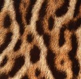 Предпосылка кожи леопарда Стоковая Фотография