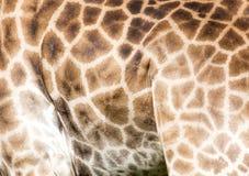 Предпосылка кожи жирафа Стоковое Изображение RF