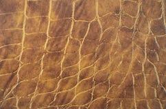 Предпосылка кожи змейки Стоковое Изображение RF
