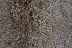 Предпосылка кожи оленей стоковое фото rf