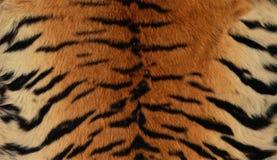 Предпосылка кожи сибирского тигра Стоковое Изображение