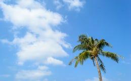 Предпосылка кокосовой пальмы и голубого неба Стоковое Изображение RF