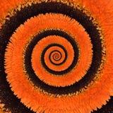 Предпосылка конспекта спирали безграничности цветка Gerbera Стоковые Изображения