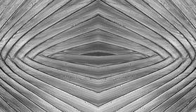 Предпосылка конспекта текстуры заводов банана черно-белая Стоковая Фотография RF