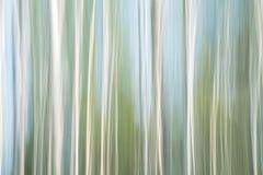Предпосылка конспекта striped и почищенная щеткой Березовая древесина в движении Стоковое Изображение RF