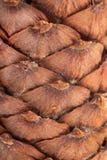 Предпосылка конуса кедра Стоковое фото RF