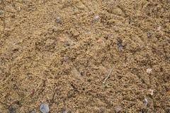 предпосылка коричневых горчичных зерен абстрактная Стоковая Фотография