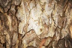 Предпосылка коры дерева абстрактная, ретро процесс стиля Стоковое Изображение