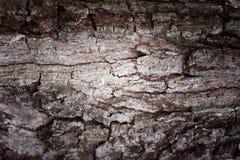Предпосылка коры дерева абстрактная Ретро процесс стиля Стоковые Фотографии RF