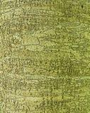 Предпосылка коры дерева Стоковые Изображения