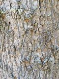 Предпосылка коры дерева Стоковые Фотографии RF