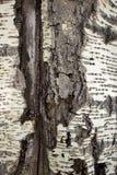 Предпосылка коры дерева Стоковое Изображение