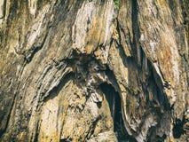 Предпосылка коры дерева Стоковая Фотография