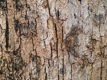 Предпосылка коры дерева Стоковые Фото