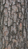 Предпосылка коры дерева Стоковая Фотография RF