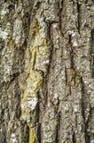 Предпосылка коры дерева Стоковое Изображение RF