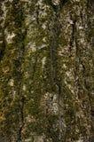Предпосылка коры дерева Стоковое фото RF