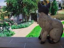 Предпосылка кота и сада в курорте Стоковые Фото