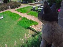 Предпосылка кота и сада в курорте Стоковое Изображение RF
