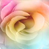 предпосылка красивейшая подняла Стоковое Фото