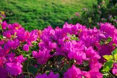 Предпосылка красивого флористического куста Естественная предпосылка Стоковые Фото