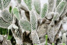 Предпосылка красивых кактусов, садовничая тема Стоковые Фото