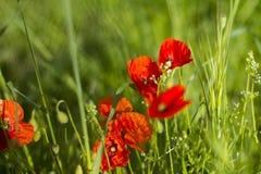 предпосылка красит желтый цвет свежей зеленой весны прачечного белый Стоковое Фото