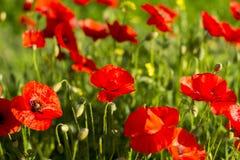 предпосылка красит желтый цвет свежей зеленой весны прачечного белый Стоковое Изображение