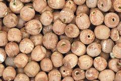 Красное семя лотоса Стоковое фото RF
