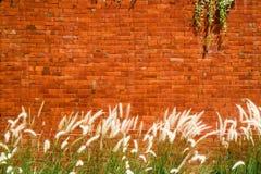 Предпосылка красной кирпичной стены с infr завода травы и муравья Cogon Стоковое Изображение RF
