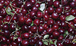 Предпосылка красных зрелых ягод вишни Стоковое Изображение