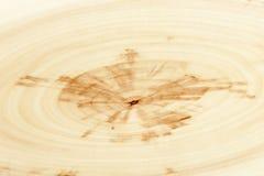 Предпосылка крупного плана года звенит текстура уникально дерева золы relict (sogdiana Fraxinus) Стоковое Фото
