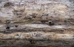 Предпосылка крупного плана журнала Driftwood Стоковые Фотографии RF