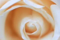 Предпосылка крупного плана конспекта розовая Стоковая Фотография