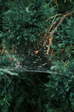 Предпосылка крупного плана паука Сеть паука на su Стоковые Фотографии RF