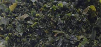 Предпосылка, крупный план wakame морской водоросли Стоковое фото RF