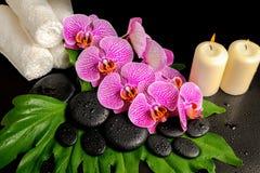 Предпосылка курорта камней Дзэн с росой, зацветая хворостина обнажала VI Стоковое Изображение RF