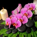 Предпосылка курорта камней Дзэн с росой, зацветая хворостина обнажала VI Стоковые Фото