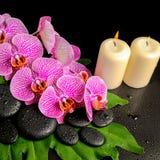 Предпосылка курорта камней Дзэн с росой, зацветая хворостина обнажала VI Стоковая Фотография RF