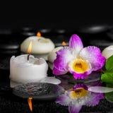 Предпосылка курорта фиолетового dendrobium орхидеи, зеленых лист с росой Стоковое Изображение RF