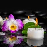Предпосылка курорта фиолетового dendrobium орхидеи, зеленых лист с росой Стоковые Фотографии RF
