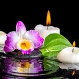 Предпосылка курорта фиолетового dendrobium орхидеи, зеленых лист с росой Стоковая Фотография RF