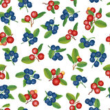 Предпосылка клюквы и голубики безшовная. Зрелые красные клюквы с листьями. Иллюстрация вектора. Стоковые Фотографии RF