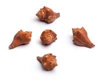 предпосылка максимум собрания клиппирования найденный деталью мой seashell разрешения портфолио фото путя к белизне Стоковая Фотография
