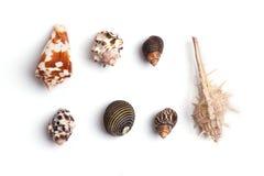 предпосылка максимум собрания клиппирования найденный деталью мой seashell разрешения портфолио фото путя к белизне Стоковое фото RF