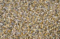 Предпосылка малых cockleshells моря Стоковые Фотографии RF