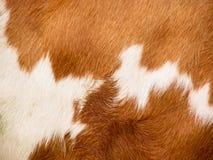 Предпосылка меха коровы (9) Стоковые Изображения
